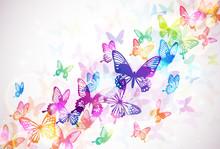 Vlinder 々