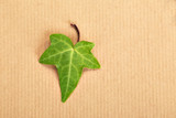 Decorative ivy leaf on a background of a wrapping paper