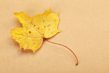 A yellow autumn leaf on a background of a wrapping paper