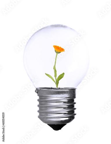 Flower growing inside light bulb isolated on white
