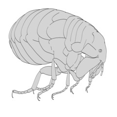 cartoon image of flea bug
