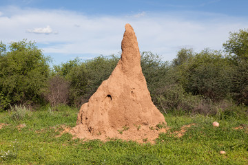 Huge termite mound in Africa