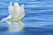 fleur de lotus sur mer d'huile, concept massage