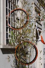 Bicicletta Arancione alla finestra