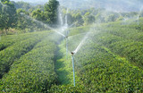 steam sprinkle in green tea plantation