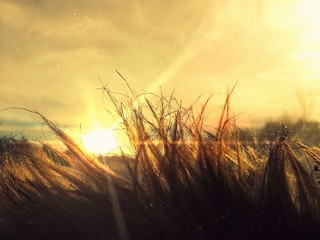 sun shining across fur