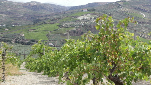 Greece, Crete. Vineyards in countryside