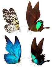papillon macro fond