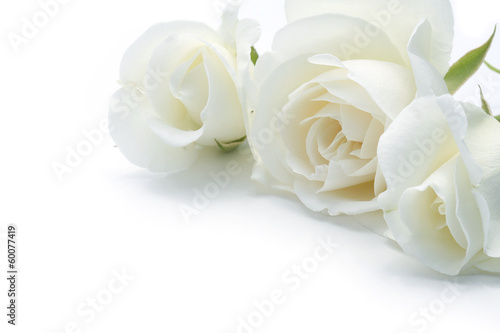 Poster Roses roses blanches