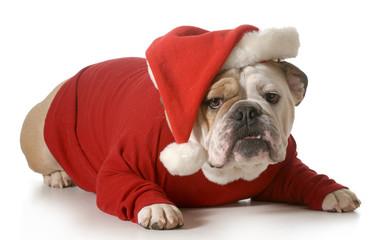 dog santa