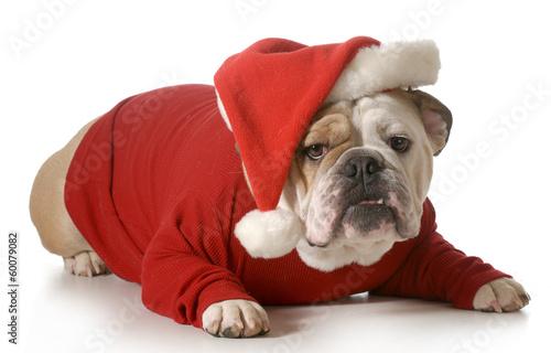 Poster dog santa