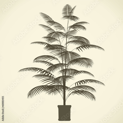 vector drawing  palm trees Interior - detailed vector