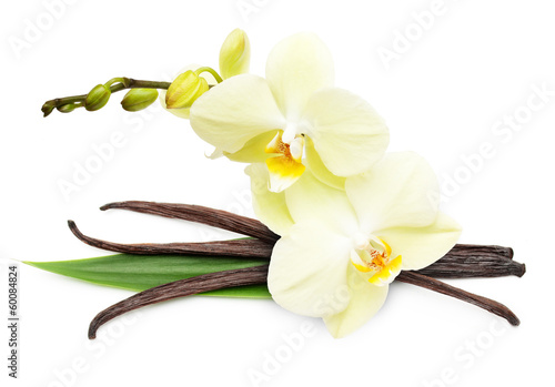 Vanilla pods and flower isolated on white background - 60084824