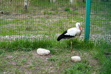 stork bird in zoo