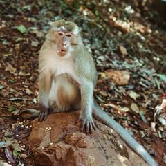 Monkey sitting on the rock