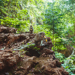 Long-tailed macaques in the jungle
