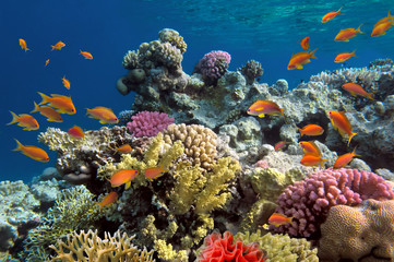 Podwodne strzelać żywy rafy z ryby