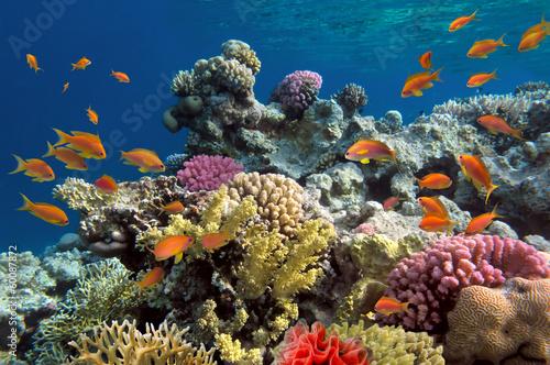 Podwodny pęd żywej rafy koralowej z rybami