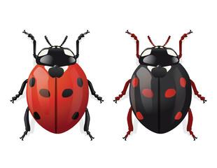 COCCINELLE Rouge et Noire