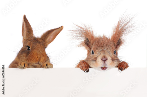 squirrel  and two rabbit