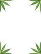 marijuana frame with white background