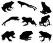 Black silhouettes of  frog, vector - 60099048