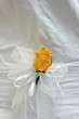 yellow rose with white ribbon for wedding decoration