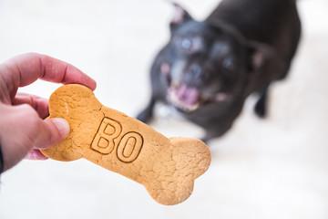 Dog and treat.