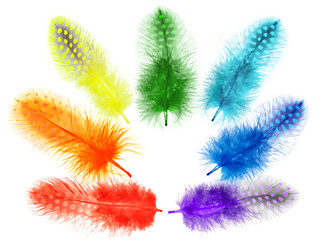 Guinea fowl feathers are painted in bright colors of the rainbow
