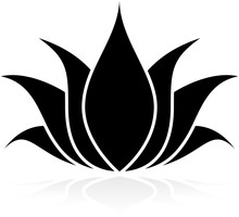 Lotus silhouet
