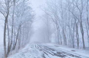 tree rows and countryside road in frost