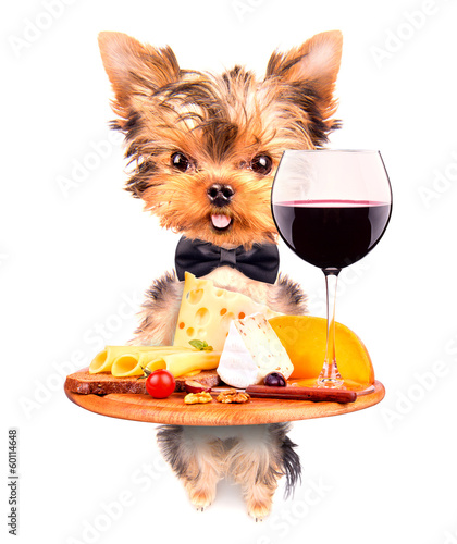 dog holding service tray with food and drink