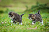 Little kittens running on the lawn