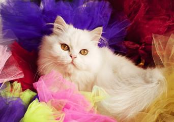 Kitten and tulle