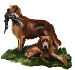 Irish Setter, Hunting dog with a duck in its mouth