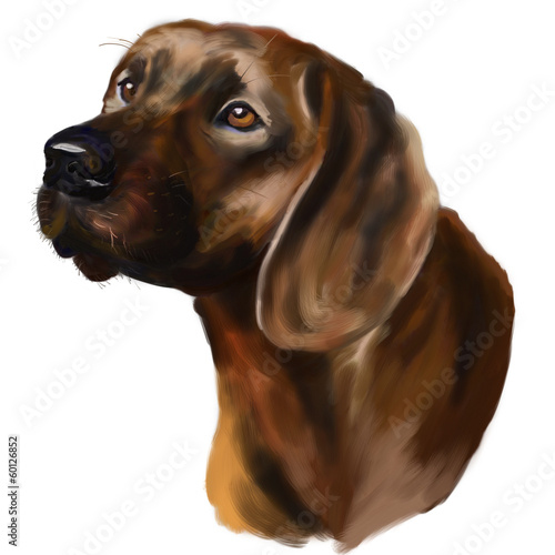 Head hunting dog - Hanoverian Scenthound