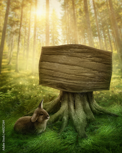 Wooden sign in the forest