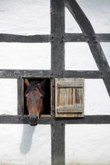 Pferd guckt aus einem Fenster in einem Fachwerkhaus