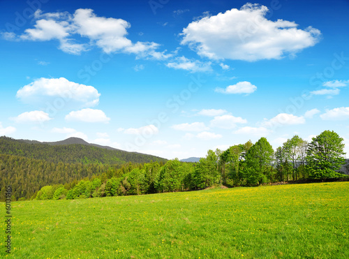 Spring landscape in Bavarian Forest National Park - Germany