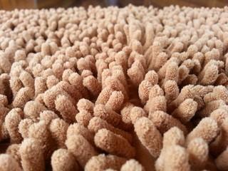 Anemone carpet