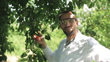 scientist checking the apple in the orchard