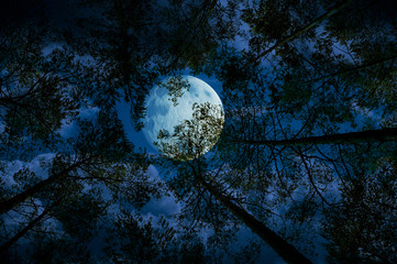 Moon at night in the forest