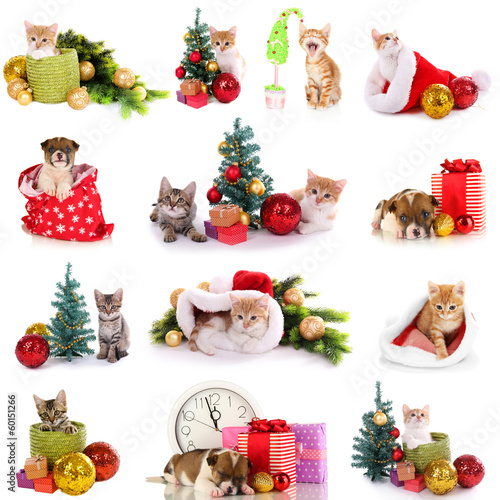 Collage of kittens and puppy with Christmas decorations