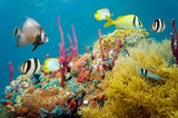 Colored underwater marine life in a coral reef