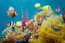 Färgade undervattenslivet i ett korallrev