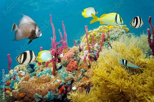Fotobehang Koraalriffen Colored underwater marine life in a coral reef