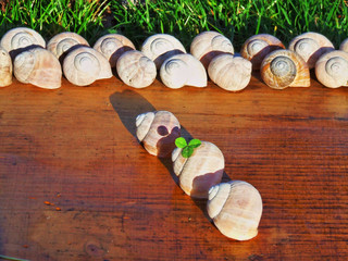 snails shells in a row