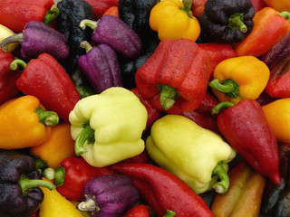 fresh harvested sweet peppers different varieties