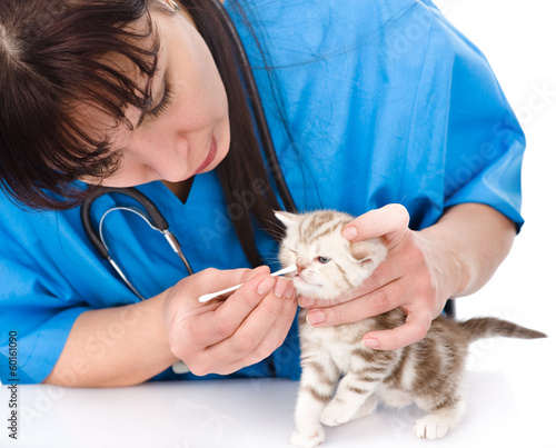 cleaning nose kitten in a veterinary clinic. isolated on white