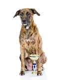champion winning dog. isolated on white background